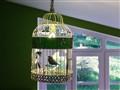 Bird cage - (empty)