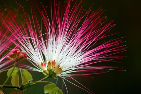 Punk Flower