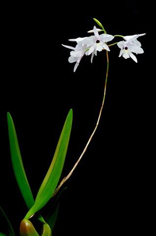 Orchids_091122_80_eds2