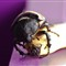 Big_Beetle__La_Fortuna_by_HappySack