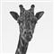 Lumpy Giraffe