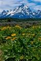 Floral Tetons