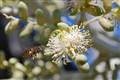 Cargo of Pollen