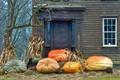 Pumpkins in Deerfield, MA