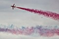 Red Arrow and bird