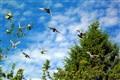birds over garden