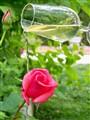 el bautizo de la rosa