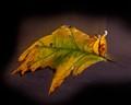 2019-11-01-13-21-39_Leaf