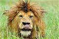 Serengeti_151bc
