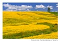 palouse flowering crop