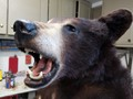 Its a Black Bear-182843
