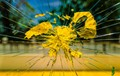 Shattered  Yellow-008352
