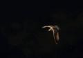 Flight in the dark