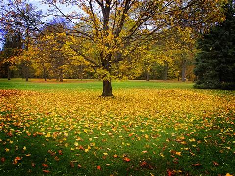 Fallen Leaves challenge IMG_9032 2