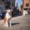 Venezian dog