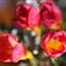 flowerpower04