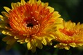 Pretty Flowers, Hidden Insect