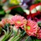 blogphotosgerber-daisies-bunched-5390