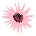 Wild Sun Flower in Abstract