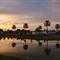 Pond & Palms