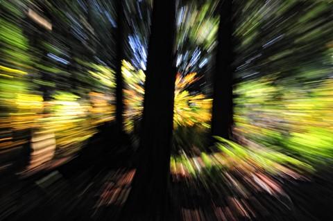 Greenbelt_08_6A_Tonal Contrast_Eml