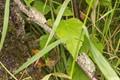 Treefrogs In Queue