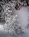 Ice Strobe