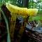 yellow shrooms