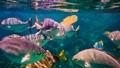 Fish Feeding Frenzy-1492
