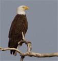 Eagle 3 03.06.2013