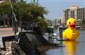 River Duck