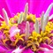 M B 7 flower