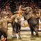 Elephants Riding Circus challenge