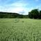 Fields ...