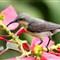 68_Sunbird_IMG_8999