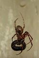 arachne kai ouroboros