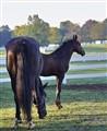 Annie's Foal