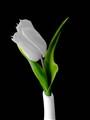 Flower b-w