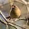 Birds14_Jan18_080_eds