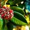 Magnoiia grandiflore_Southern Magnolia__MG_3996_AJG