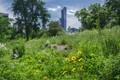 Midtown meadow