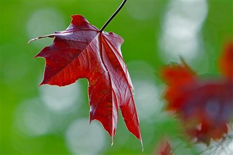 Leaf & Boken