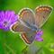 Garden_macros_07_2021_042