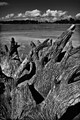 EOS550D_IMJ_5048 - Dead Stump