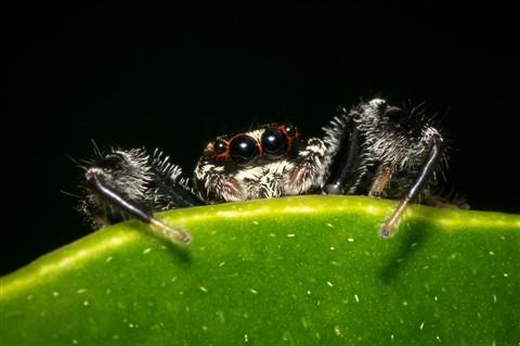 Spider3 web