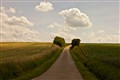 Road at Noon