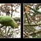 parrots3_LP