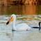 0004_white_pelican