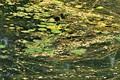 Liquid-Summer shallow water growth,Salt lake