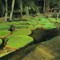 9. Water lilies. Open air theatre restaurant, Saigon  3/10s F3.5 ISO800 EV2
